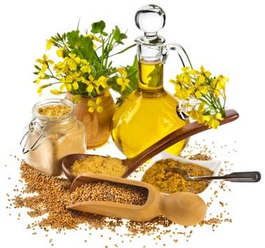 Натуральная цветущая горчица и средства, созданные из нее
