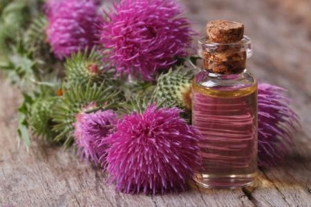 Репейник и полезное средство для волос