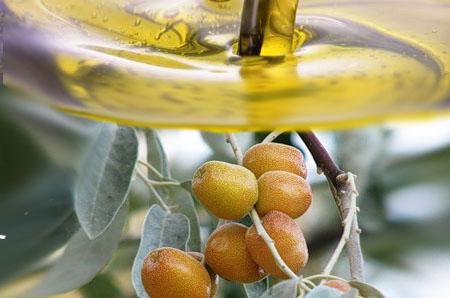 Жожоба - плоды и выжимка