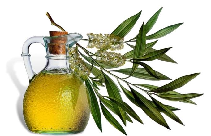 Чайное дерево: листья, ветки и средство, из него изготовляемое