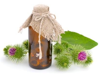 Репейник и полезный природный продукт на его основе