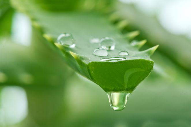 Сок алоэ часто входит в состав популярных масок с касторовым маслом
