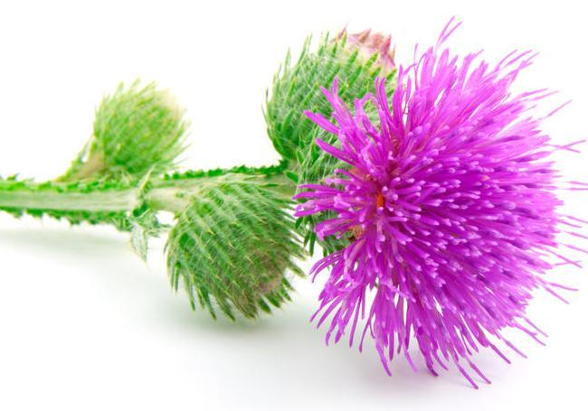 Растение из которого делают полезные косметические продукты