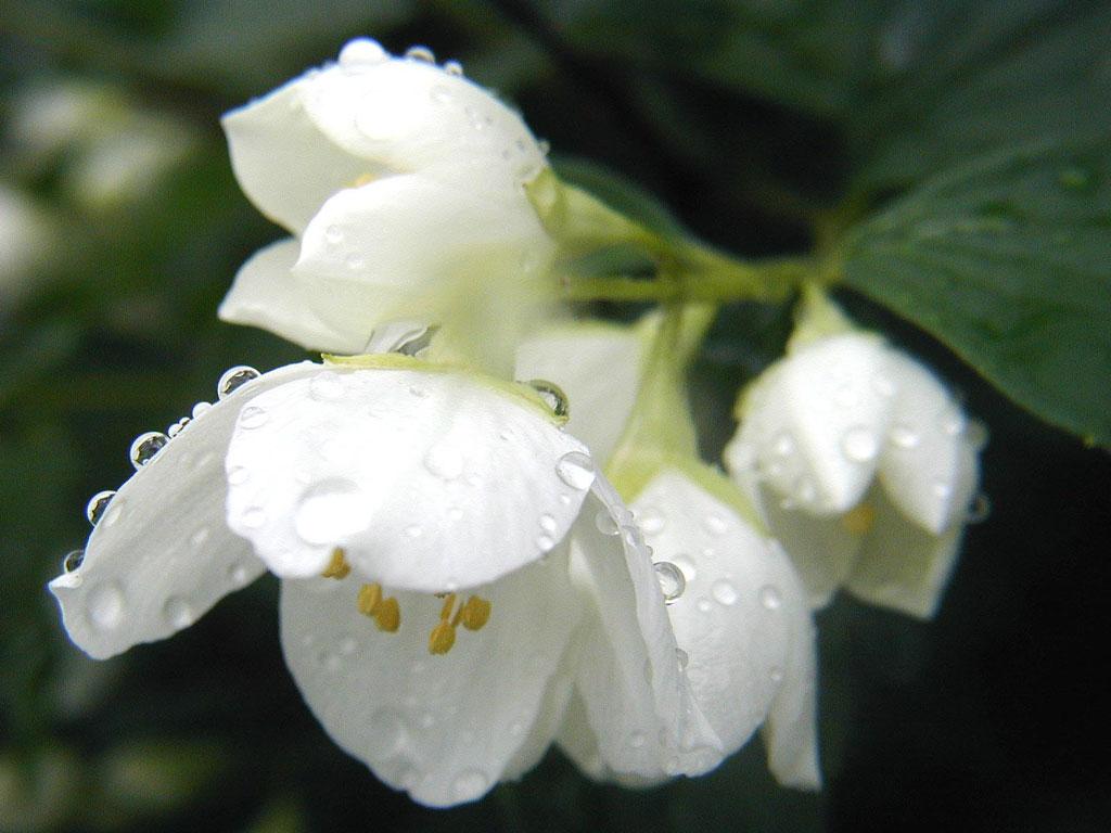 Цветок в каплях росы