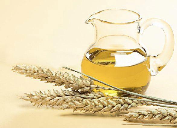 Пшеница и средство из нее
