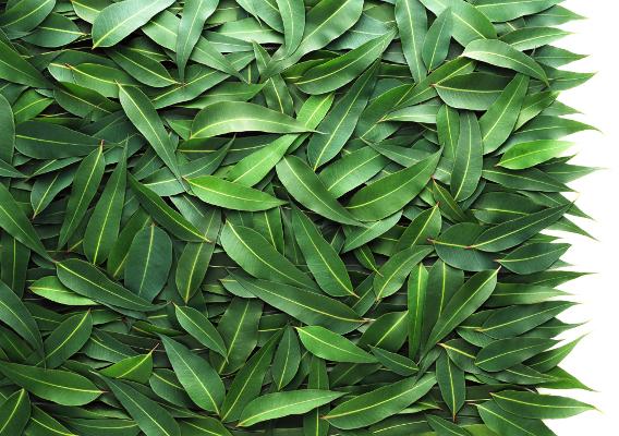 Живой ковер из листьев эвкалипта